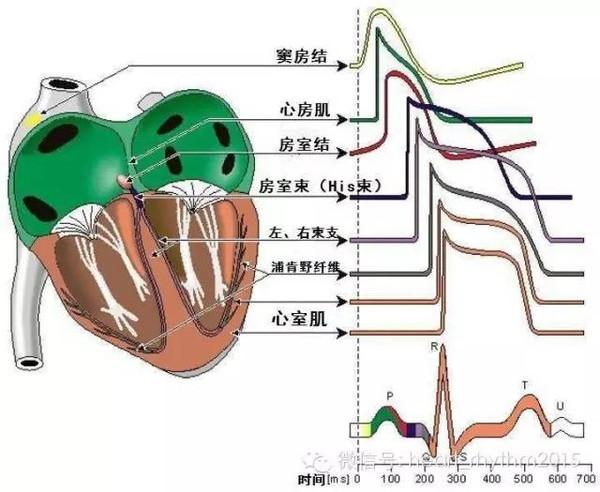 心脏电生理3D生物学虚拟仿真实验室软件