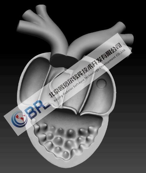 心脏电生理3D虚拟仿真软件