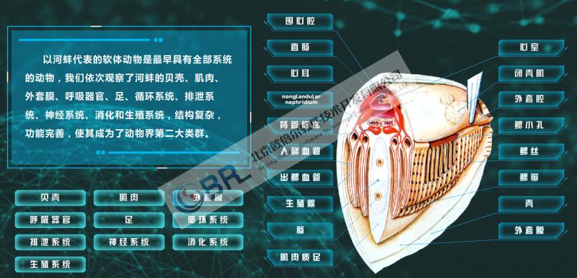 软体动物认知3D虚拟仿真软件