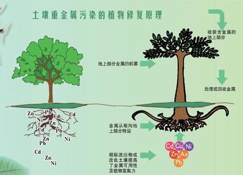 北京欧倍尔土壤改良与修复3D虚拟仿真实验软件